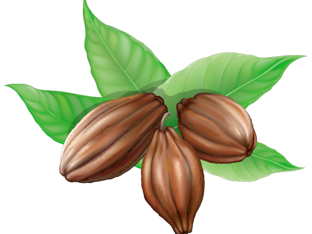 clipart freeuse stock Cacao plant free on. Cocoa clipart