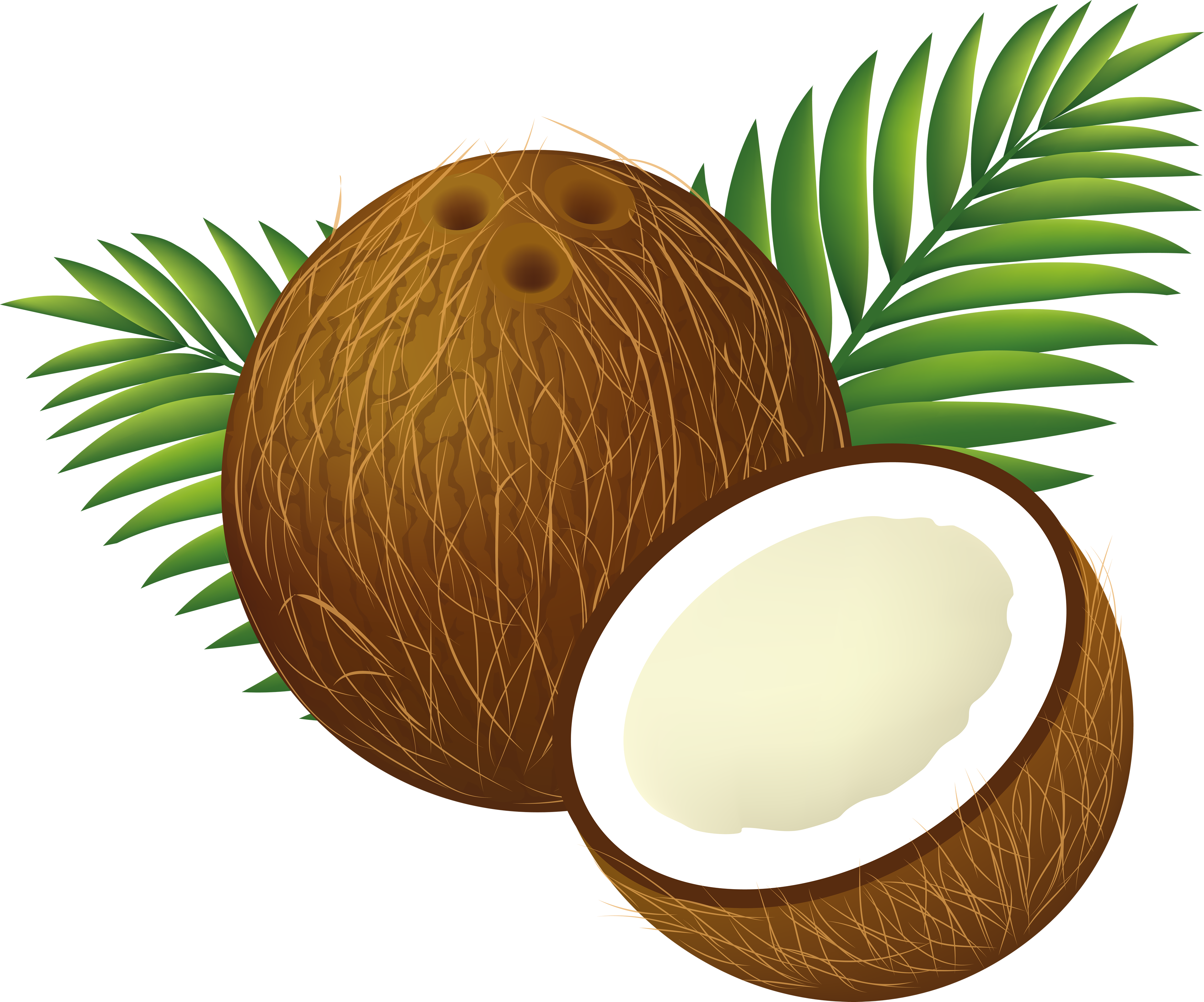 image black and white stock Ficheiro cartoon png wikip. Coconut clipart.