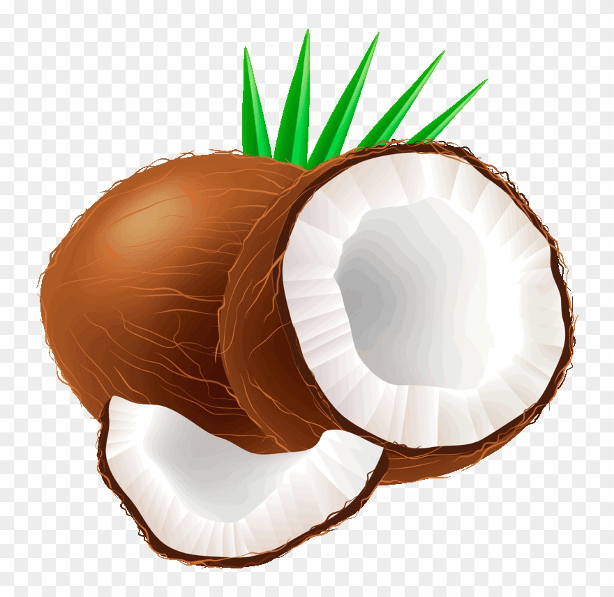 jpg freeuse library Fruit png download . Coconut clipart.