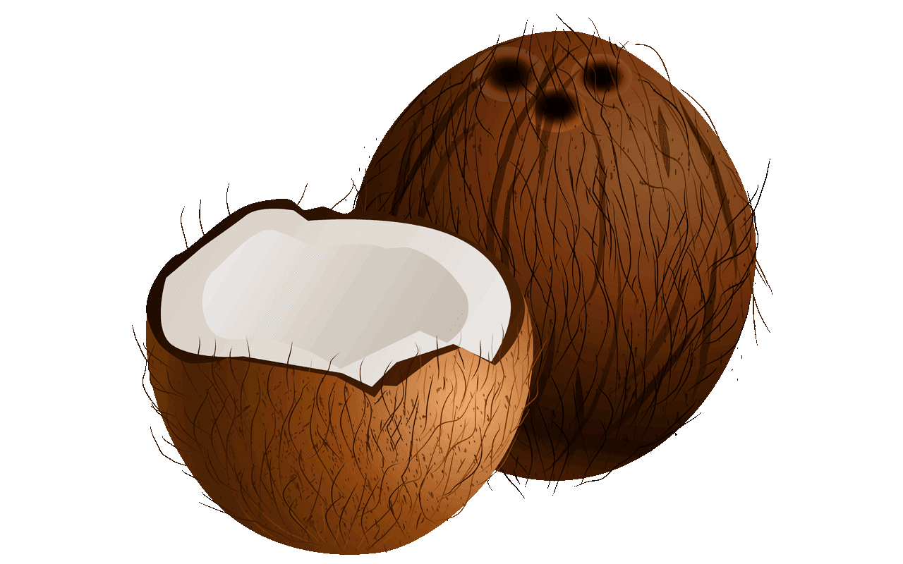 clipart Coconut clipart.  free shocking fruit