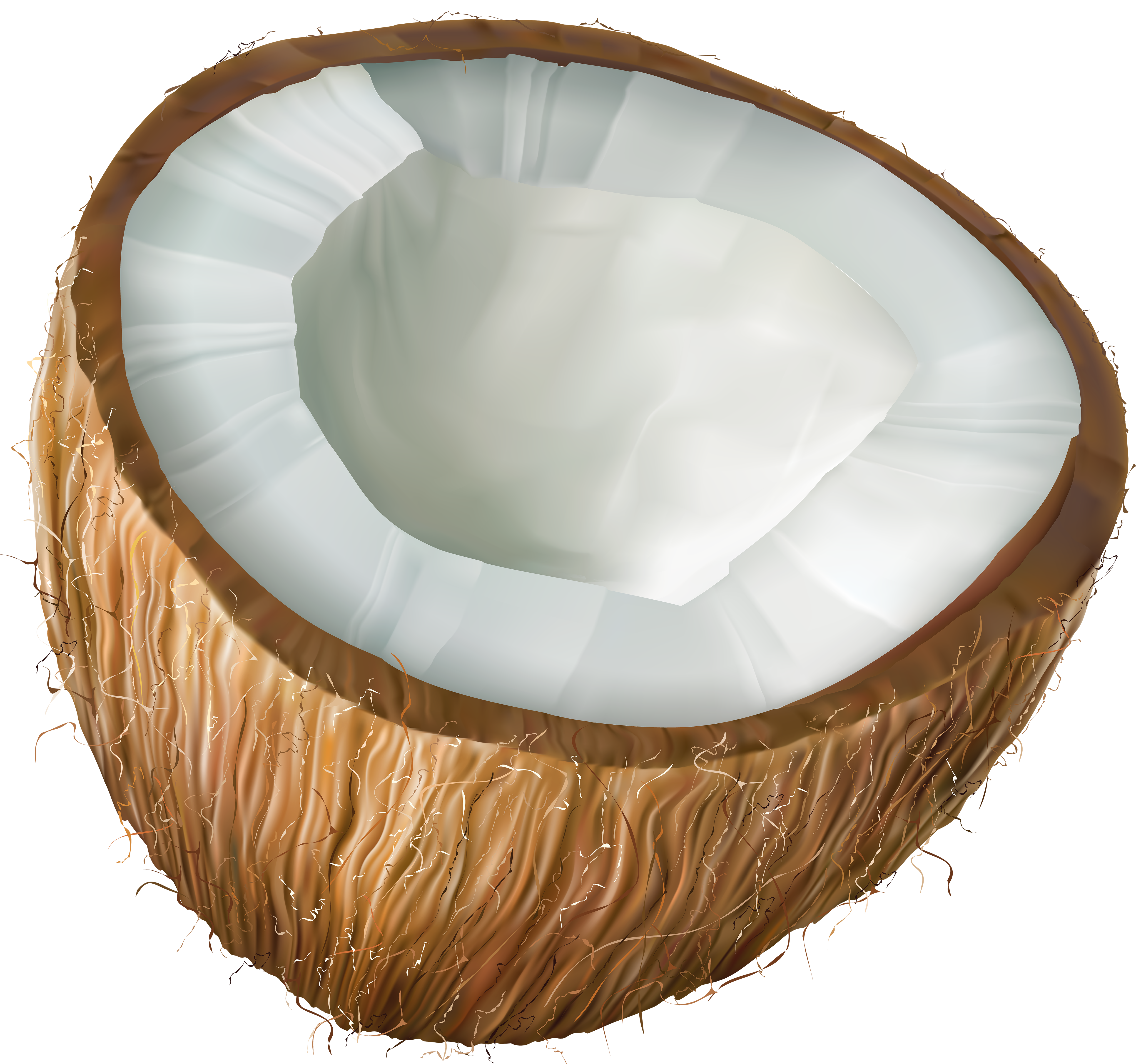 jpg free library Transparent png clip art. Coconut clipart