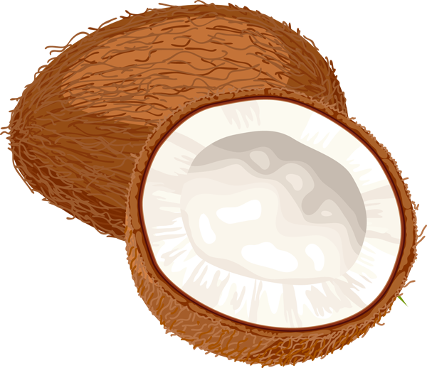 jpg transparent stock . Coconut clipart.