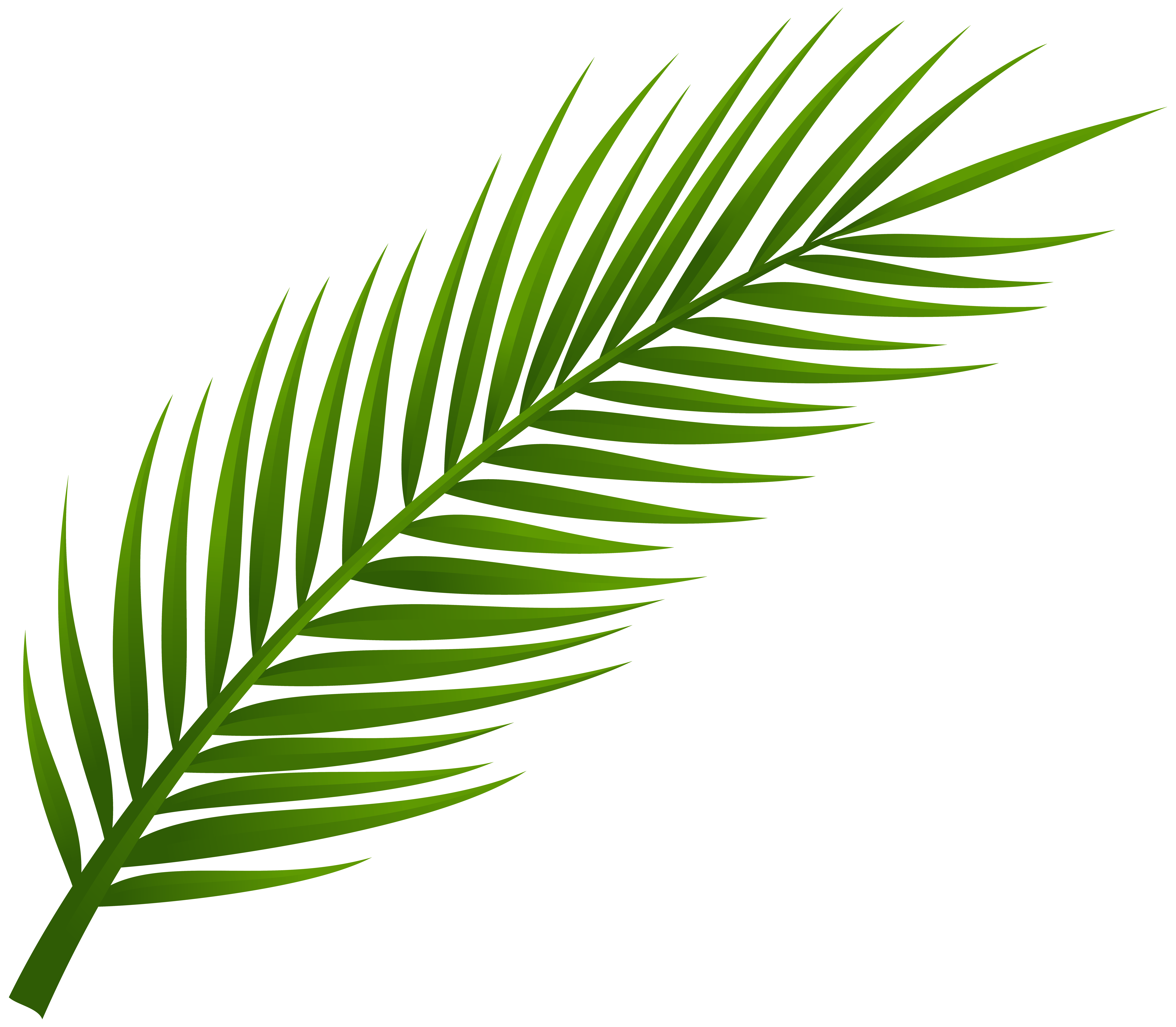 clip freeuse Coconut leaves clipart