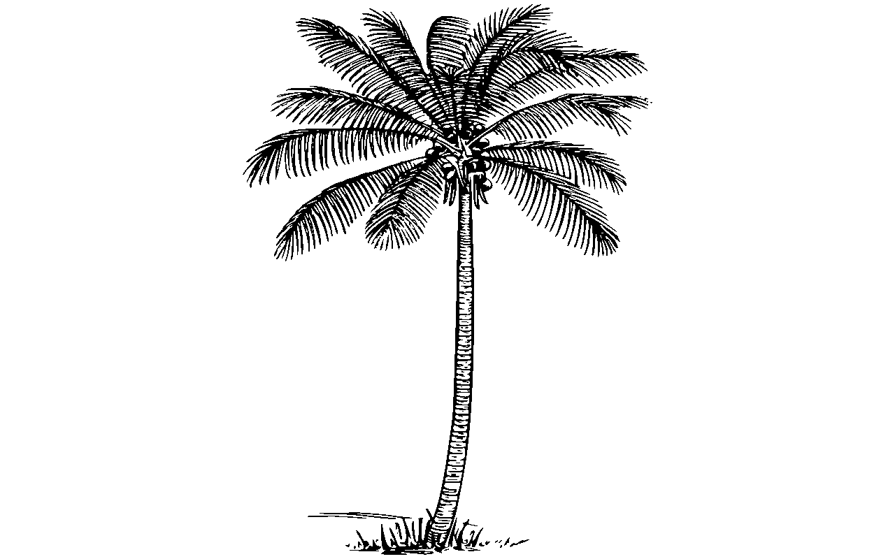 graphic royalty free download palm trees clipart black and white #58937340