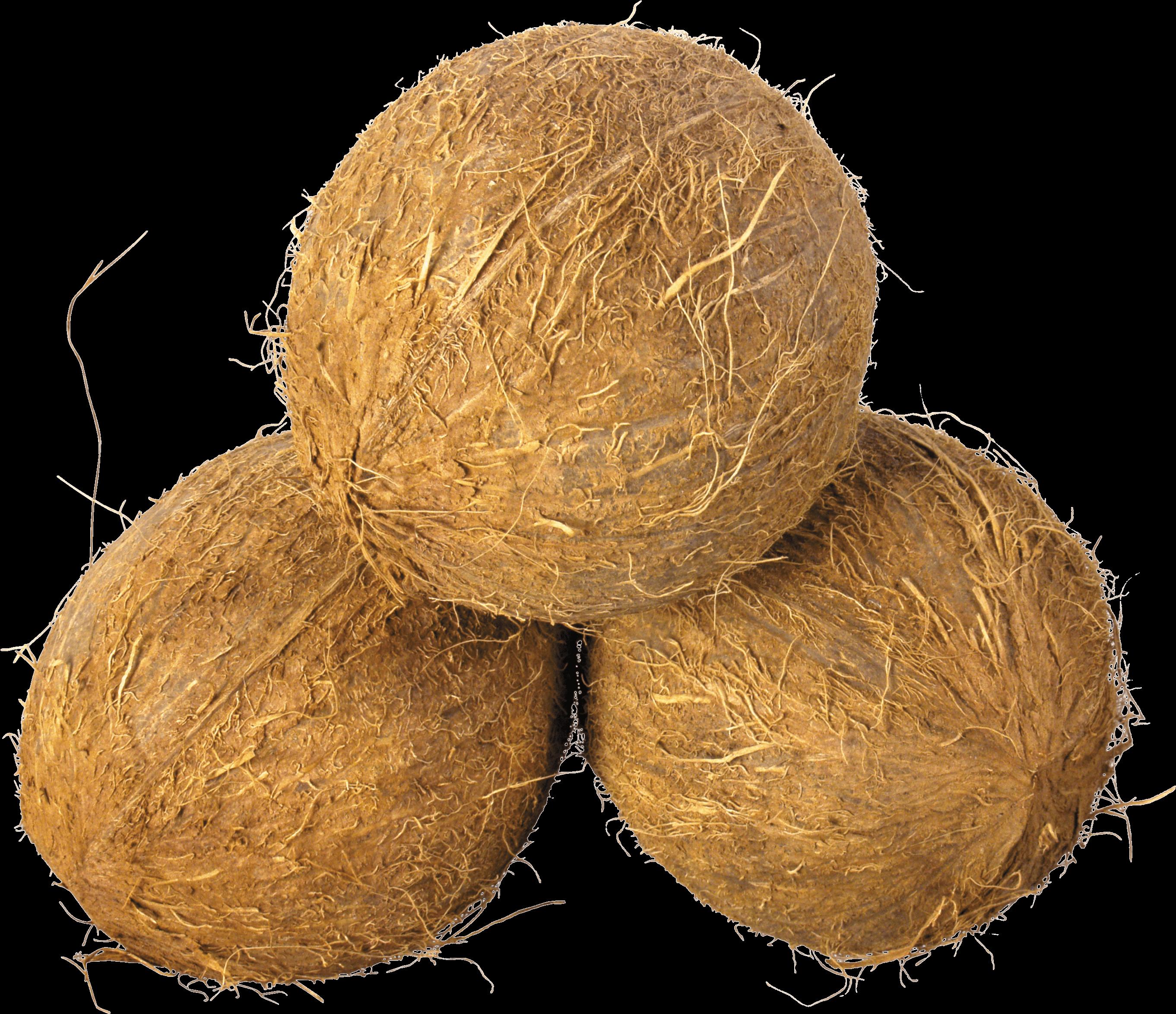 svg stock Coconut Trio transparent PNG