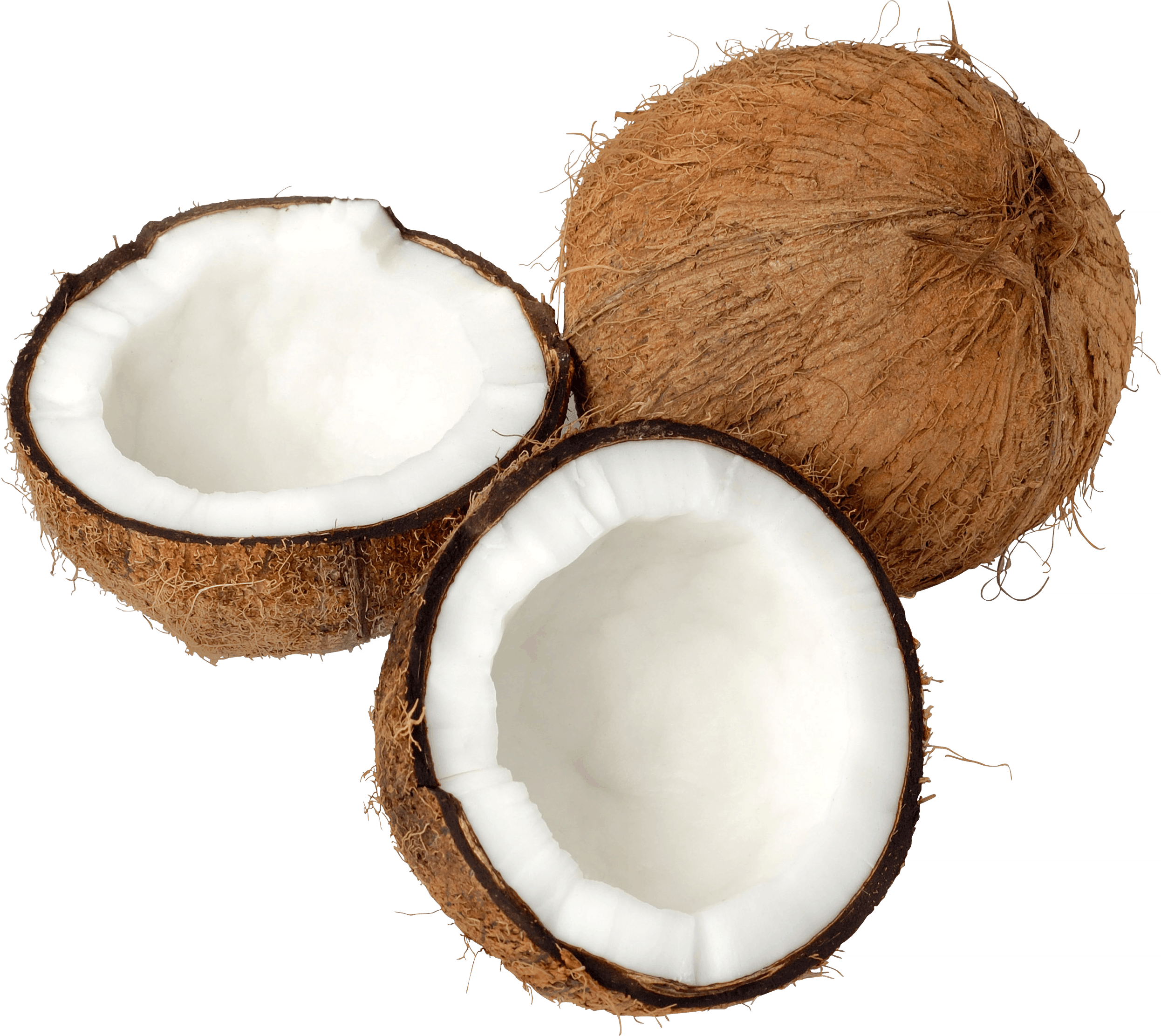 png free Clipart background free on. Transparent coconut.