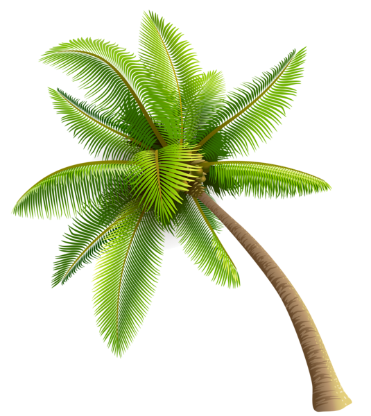 picture free stock Tree png images free. Transparent coconut background