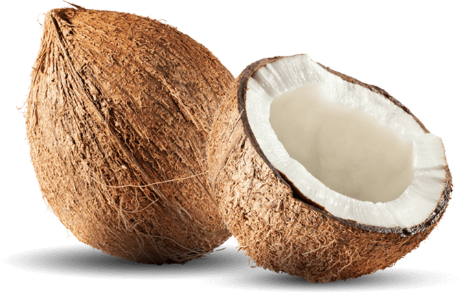 vector library download Transparent coconut. Png images free download.