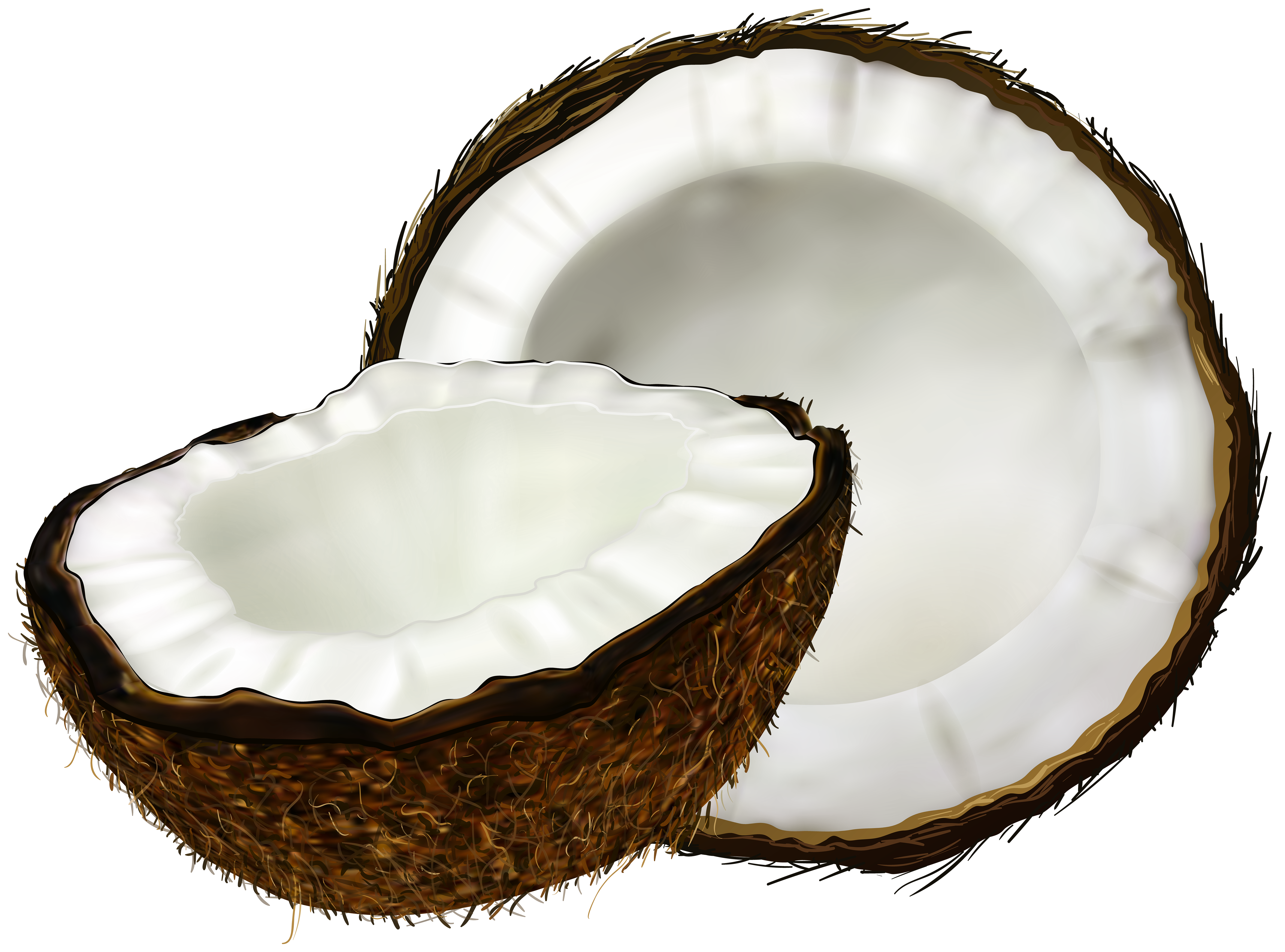 banner library Clip art image gallery. Transparent coconut.