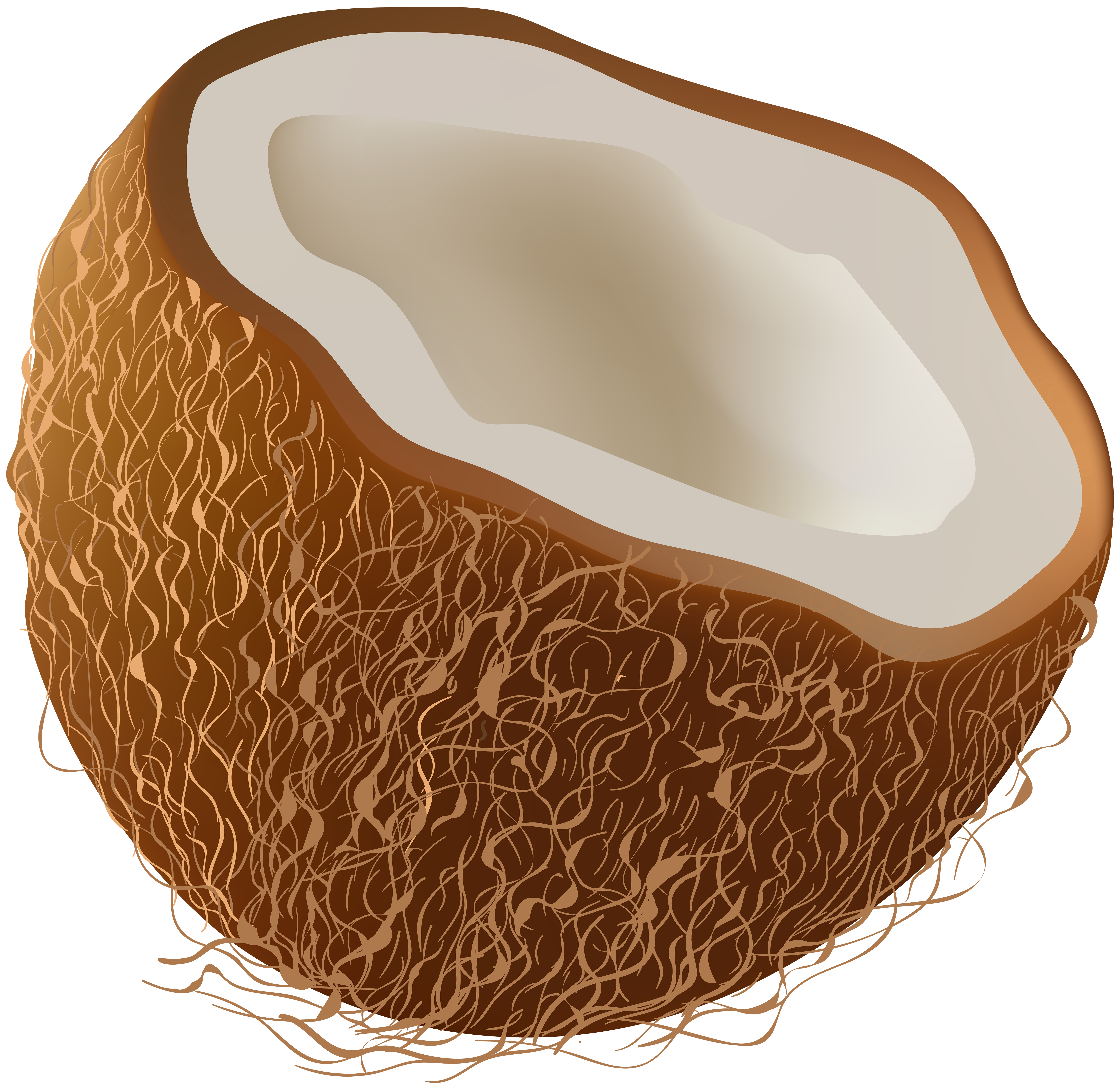 banner library Transparent coconut. Clip art image gallery.