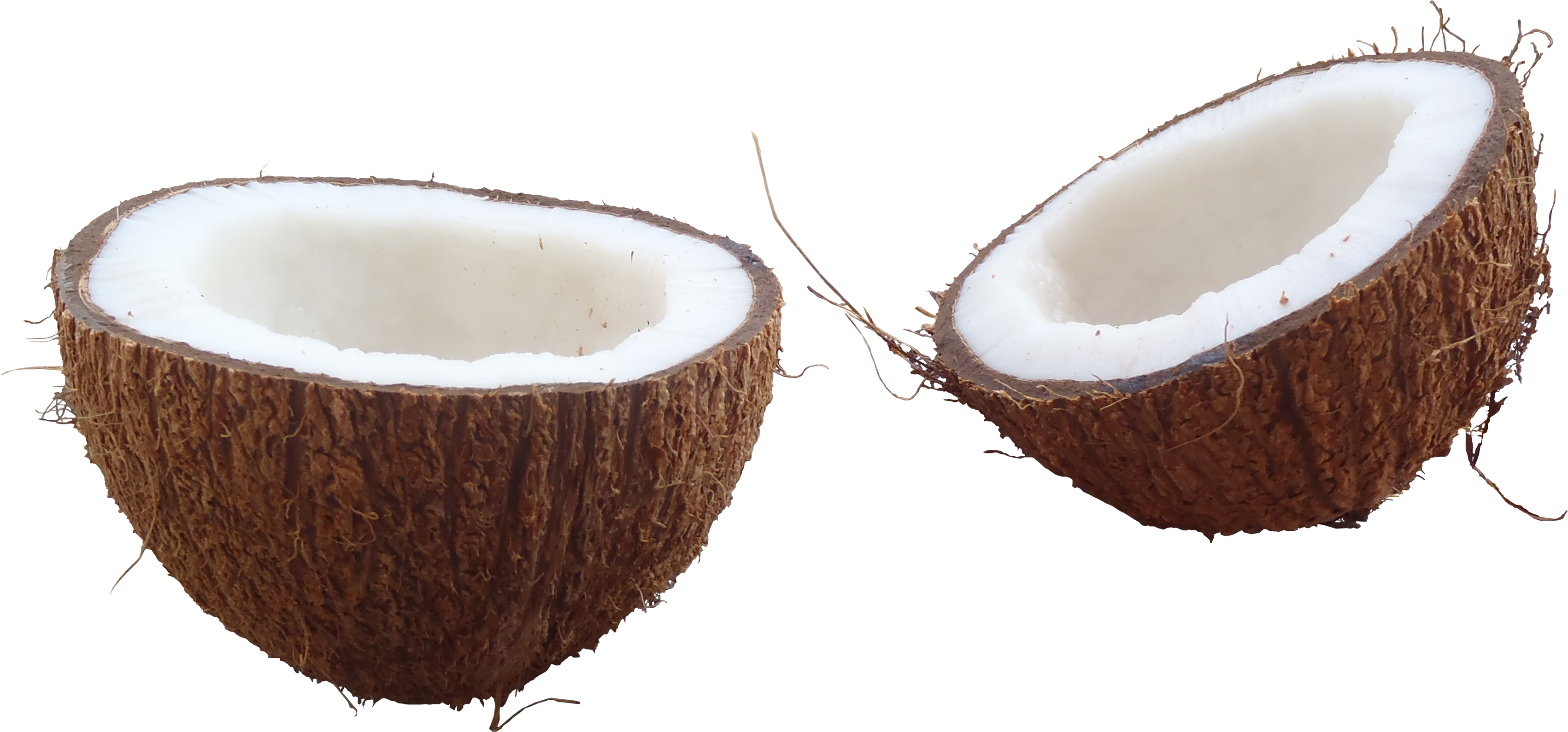 banner download Coconut PNG Images Transparent Free Download