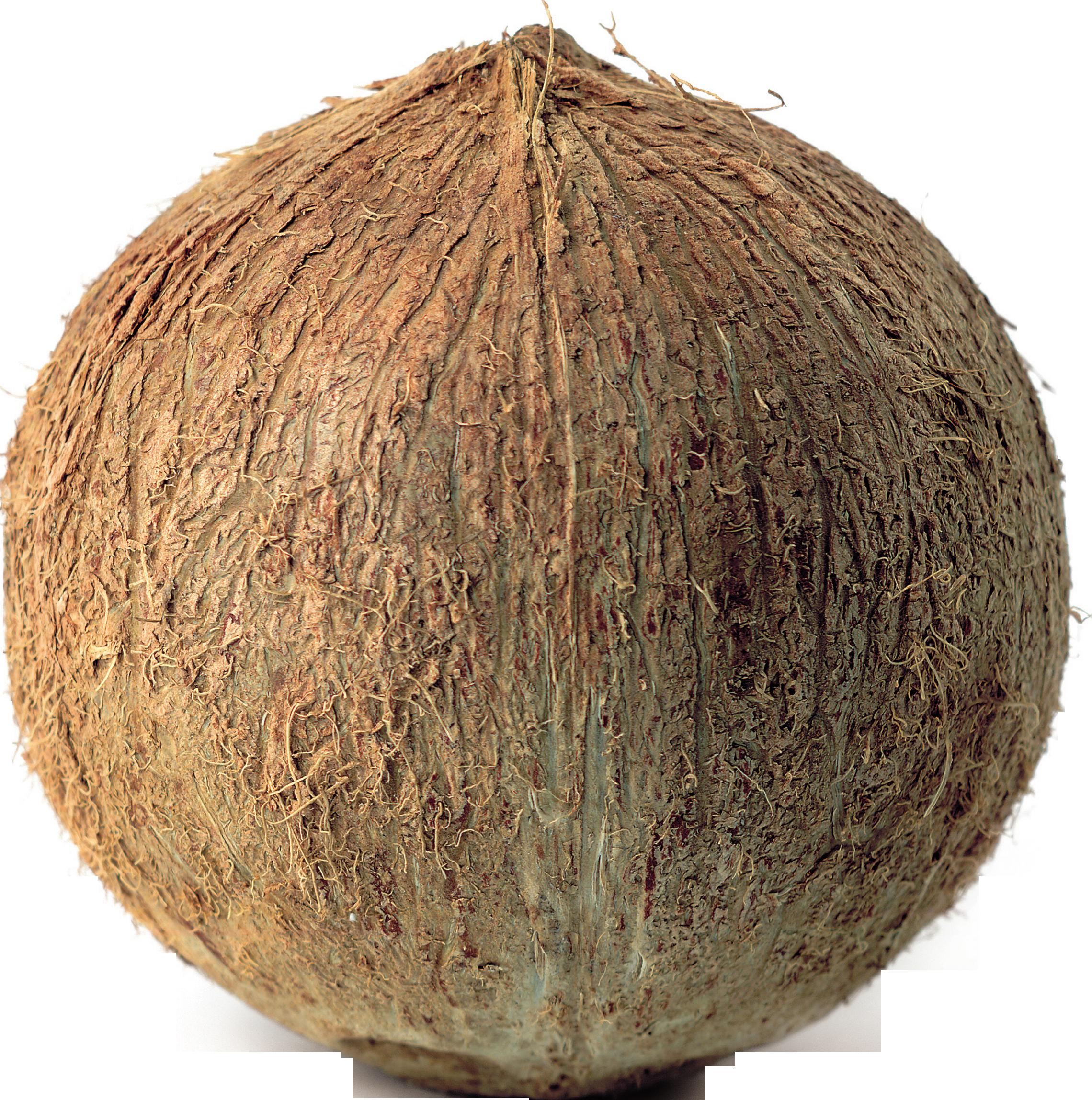 banner freeuse download Coconut PNG Image