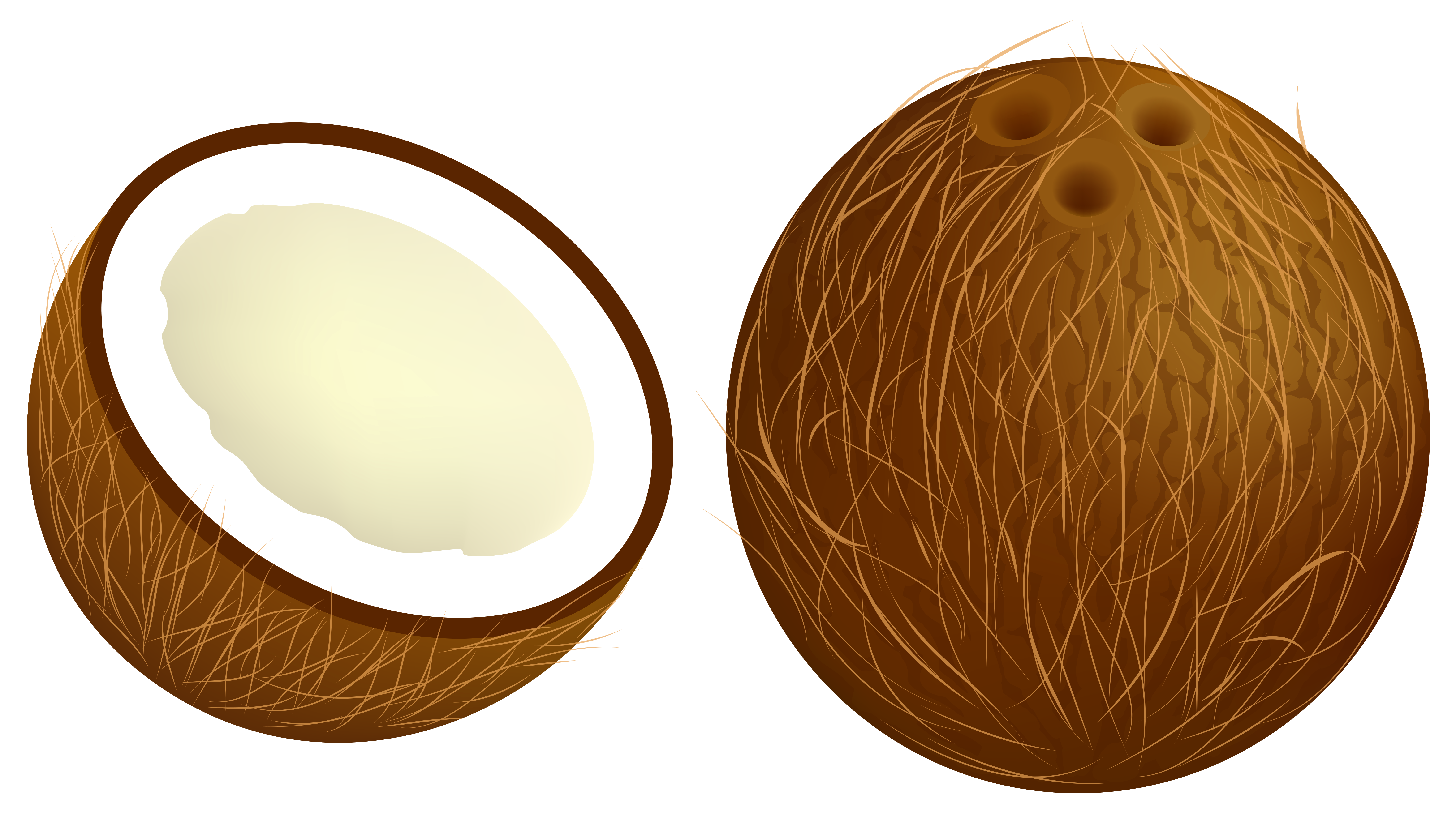 jpg free stock Collection of free Cocoanut clipart