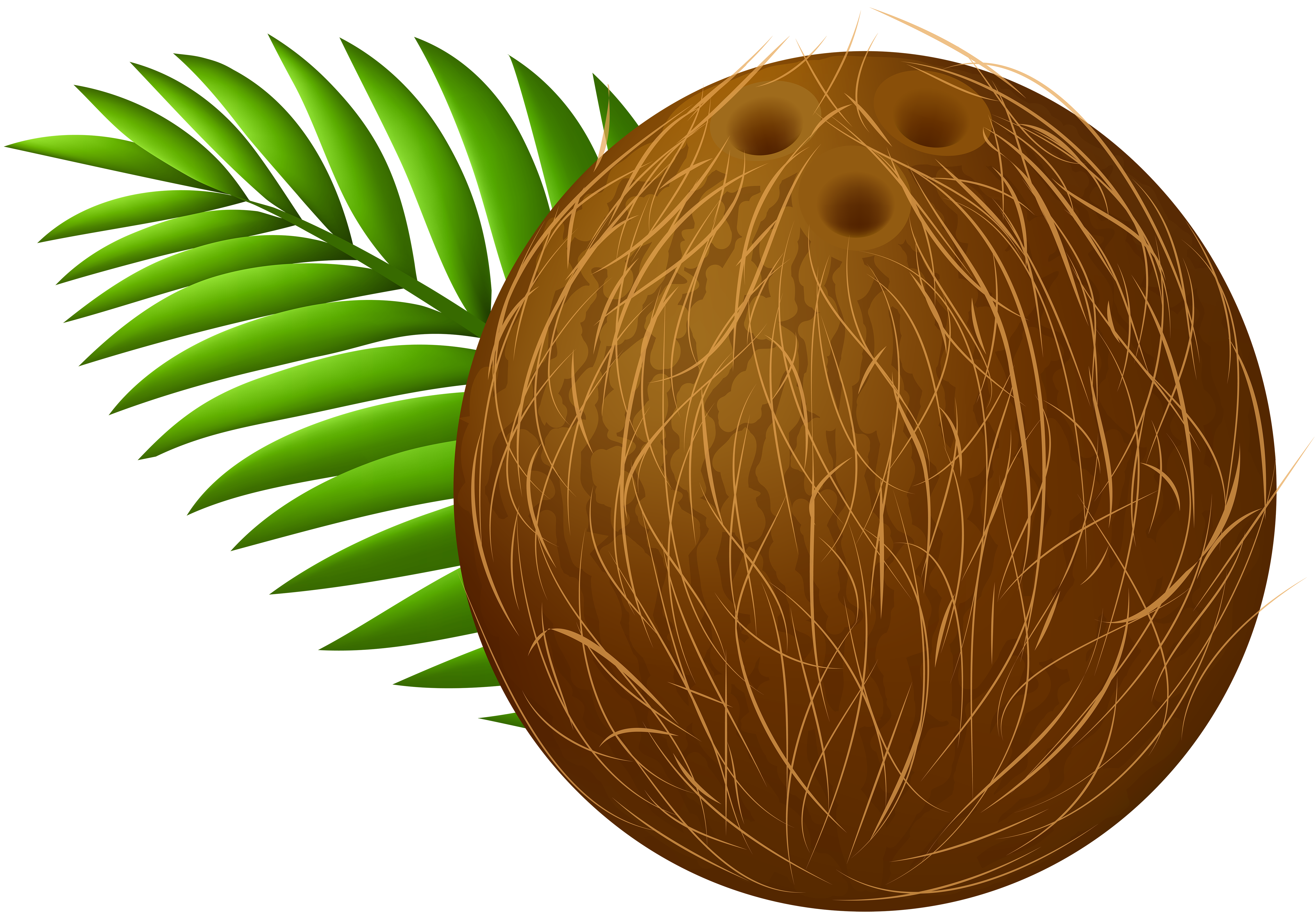 jpg transparent download Coconut clipart. Transparent png clip art.