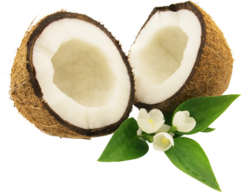 svg royalty free download Coconut PNG Picture