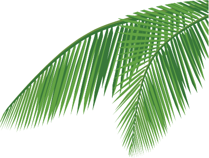 graphic library stock Coconut leaf png
