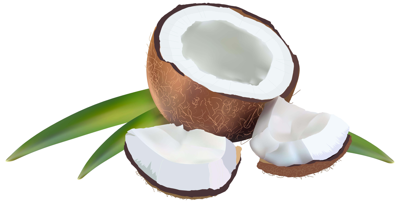 banner transparent stock Coconut PNG Transparent Images
