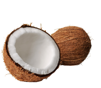 clip art free library Coconut PNG Transparent Images