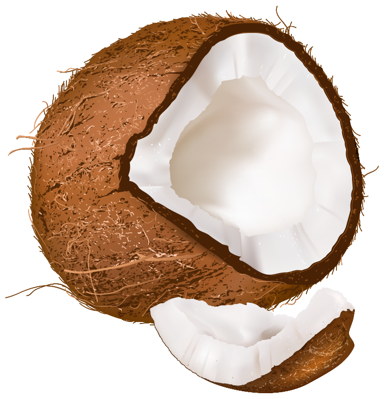 picture freeuse download Open Coconut PNG Clipart Image