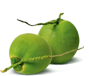 clipart library library Coconut Water