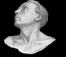 clip art freeuse stock Drawing neck collar bone. Suprasternal notch wikipedia graypng
