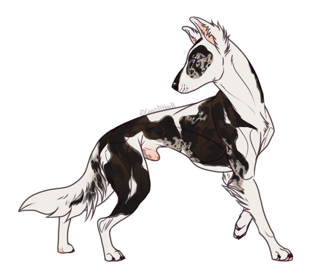 vector transparent download Collie drawing. Dog breed lurcher border