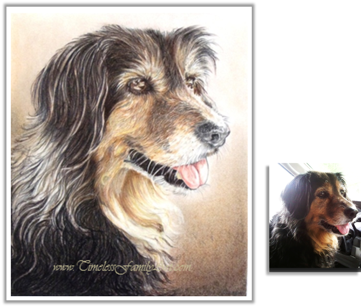image library library Drawing portrait colored pencil. Custom pet portraits paintings