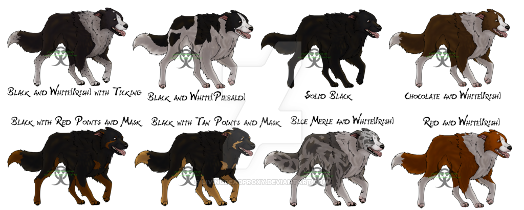 transparent Border Collies for Furry