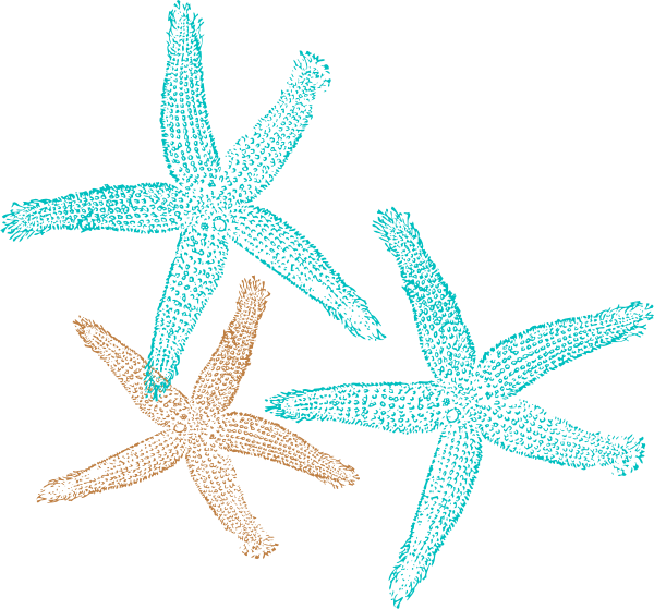 banner royalty free download Starfish clip art coral. Color clipart turquoise