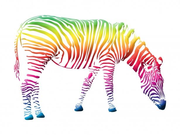 clip free Zebra free stock photo. Colorful clipart.
