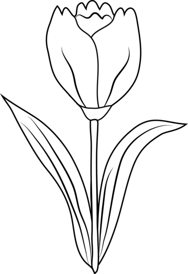clipart freeuse download Attractive Ideas Tulip Clipart Black And White Flower Coloring Page