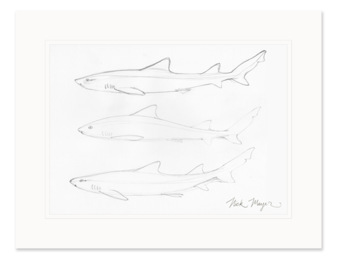 free stock Pencil Drawings