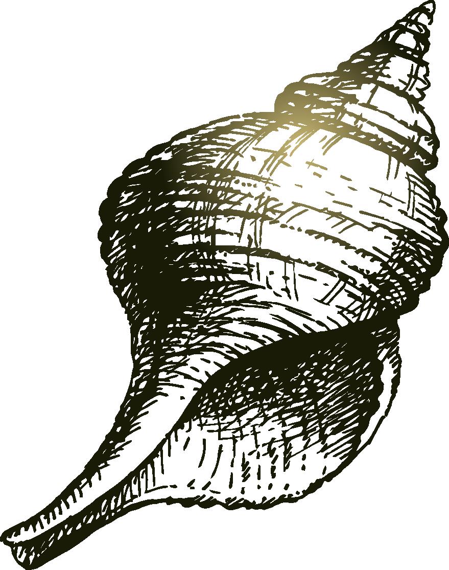 graphic royalty free stock Seashell Drawing Sea snail