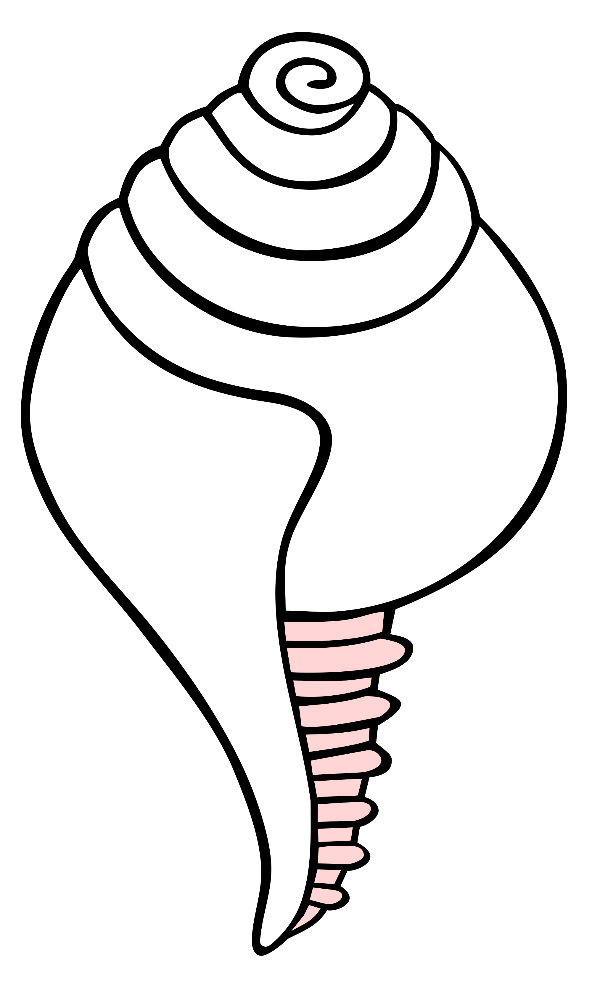 clip art library download Conch at getdrawings com. Waffles drawing easy