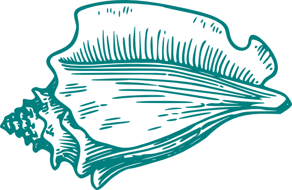 picture stock Teal Conch Shell Clip Art at Clker