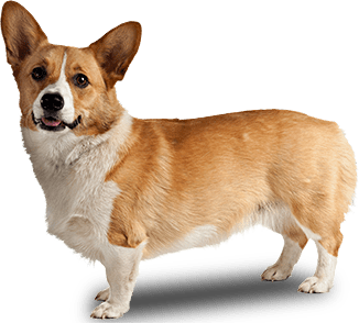 graphic royalty free stock Dog side view png. Corgi clipart transparent tumblr