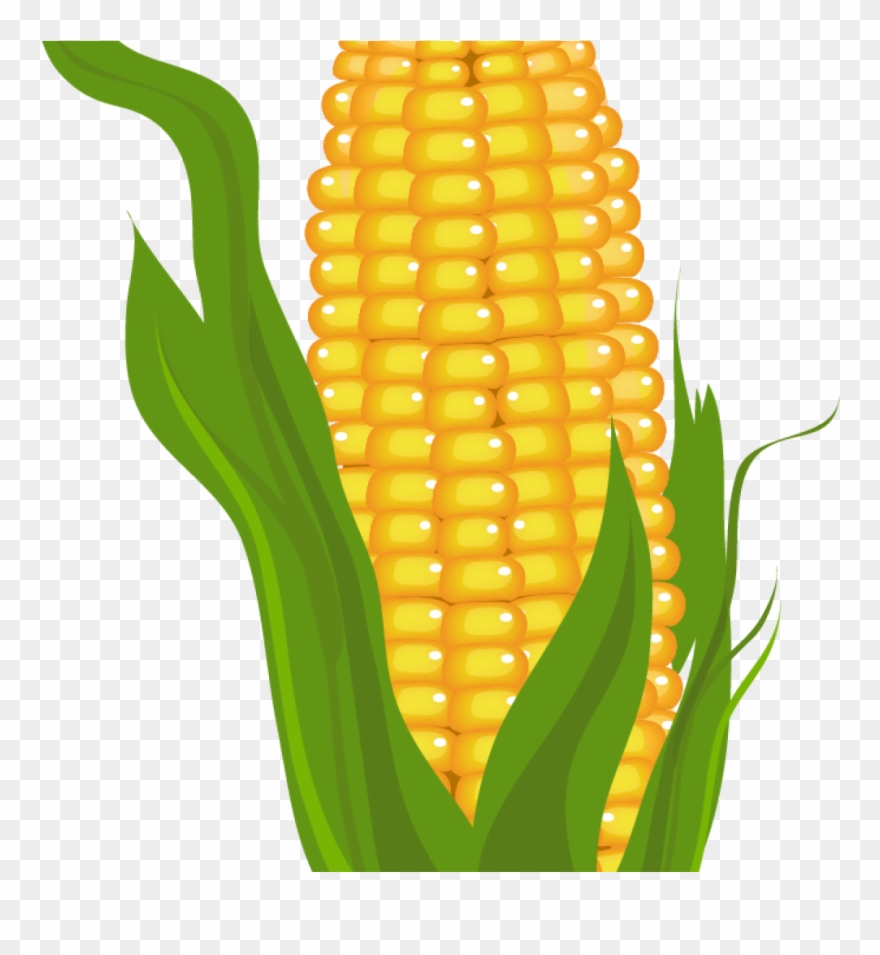 banner transparent library Clip art stock free. Corn clipart