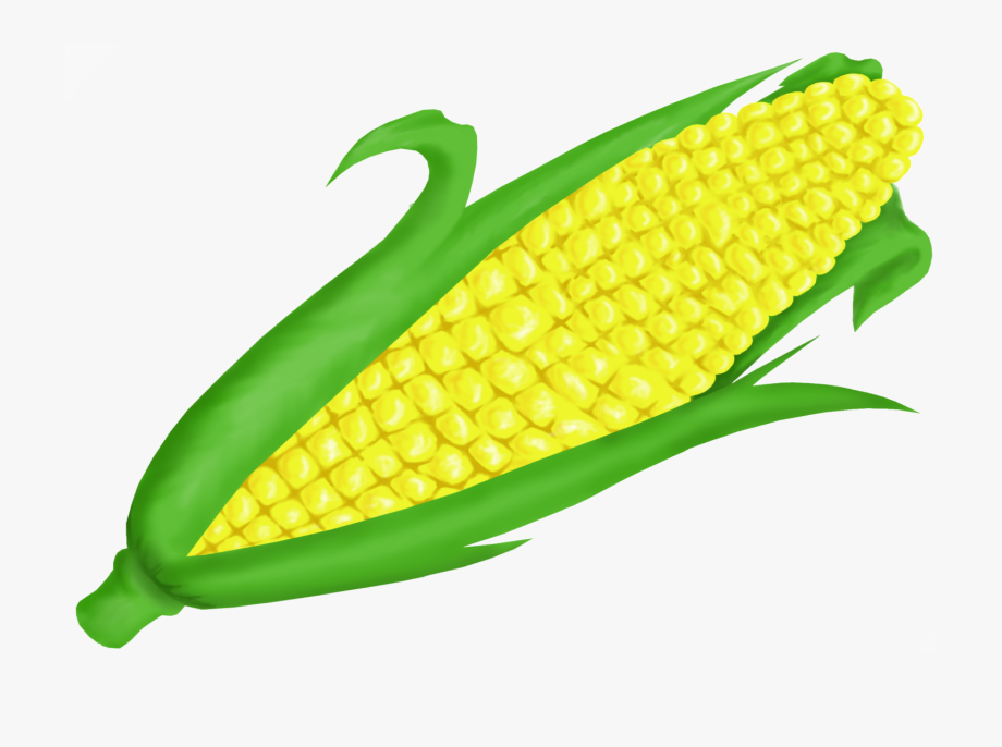 picture library library Corn clipart. Clip art free cliparts