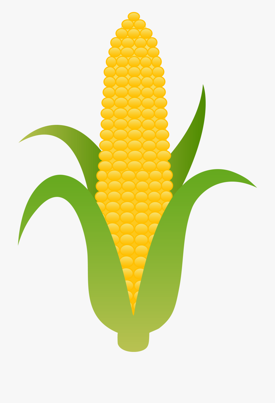 jpg freeuse download Corn clipart. Clip art free images