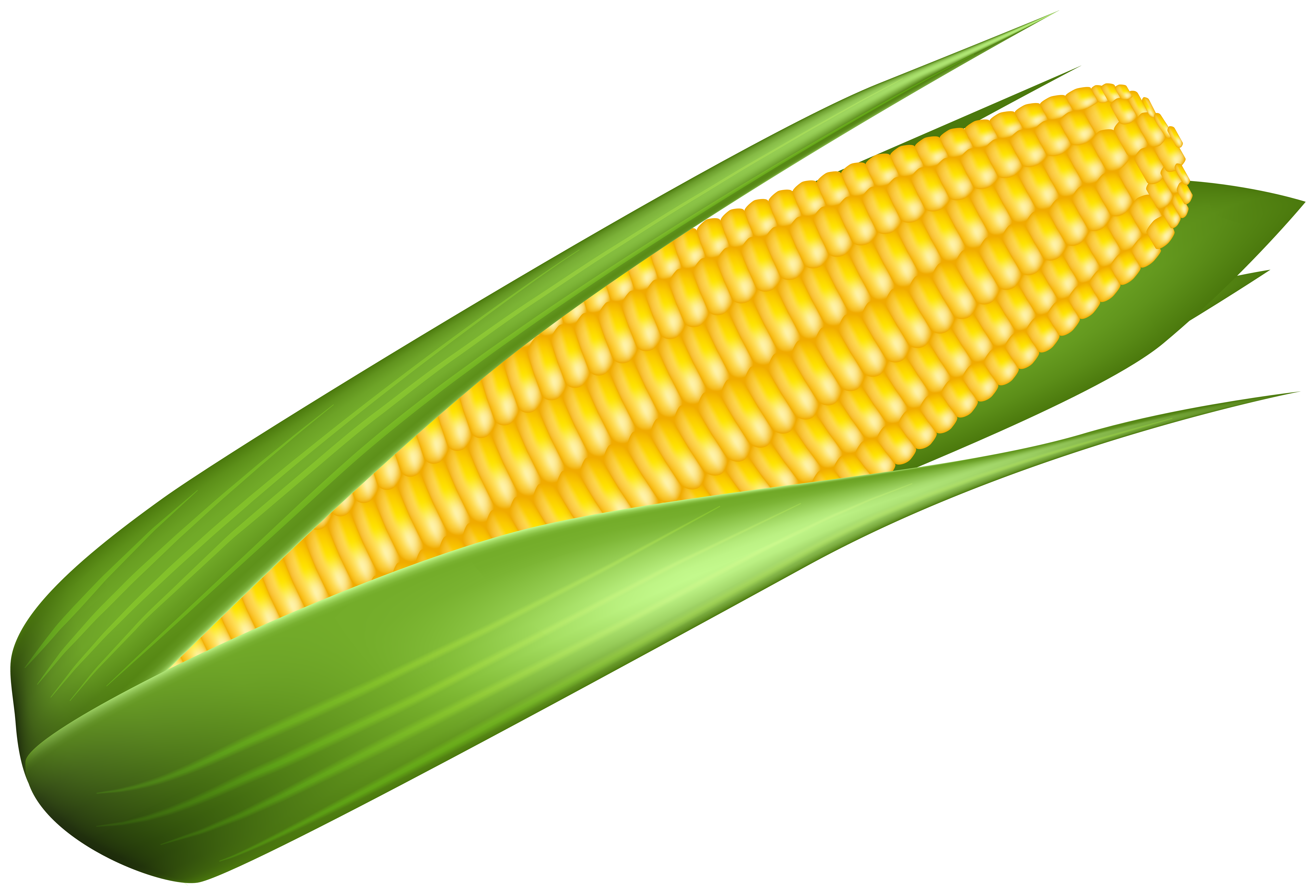 picture black and white stock Corn clipart. Transparent image gallery yopriceville.