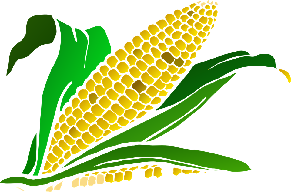 png free library Corn clipart. Harvesting crop patsy pinterest.