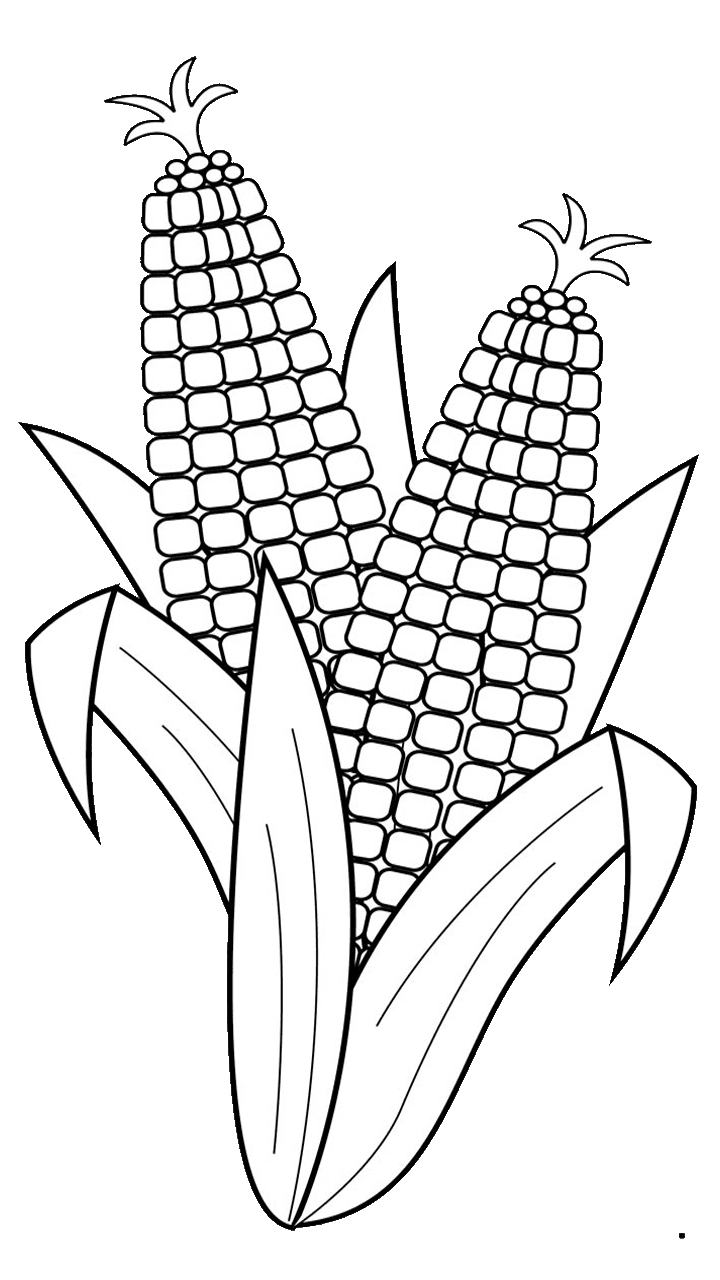 vector transparent download  surprising for free. Corn clipart drawing