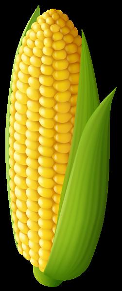 vector freeuse Transparent png clip art. Corn clipart drawing