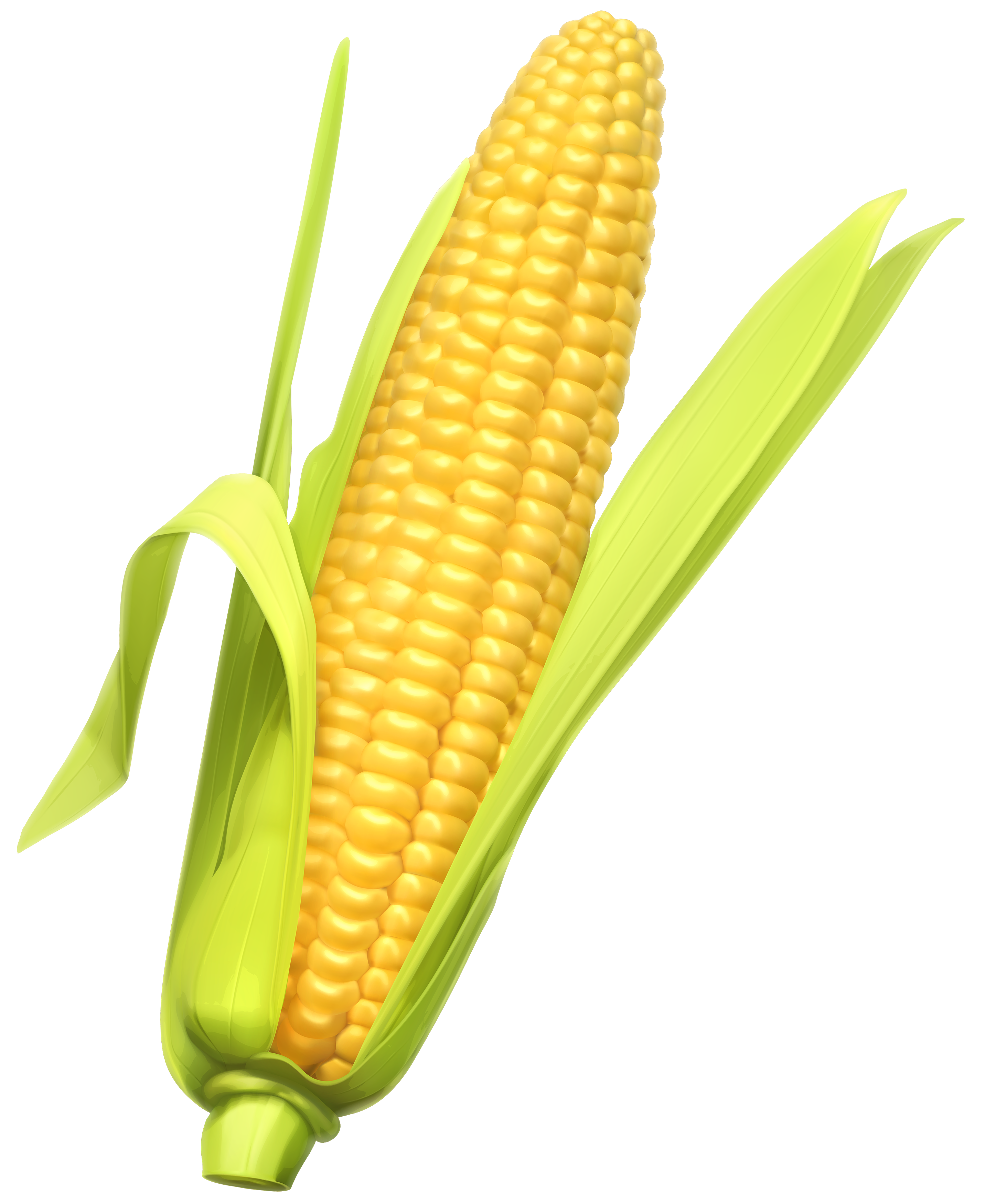 clip black and white Images of corn physic. Free web clipart