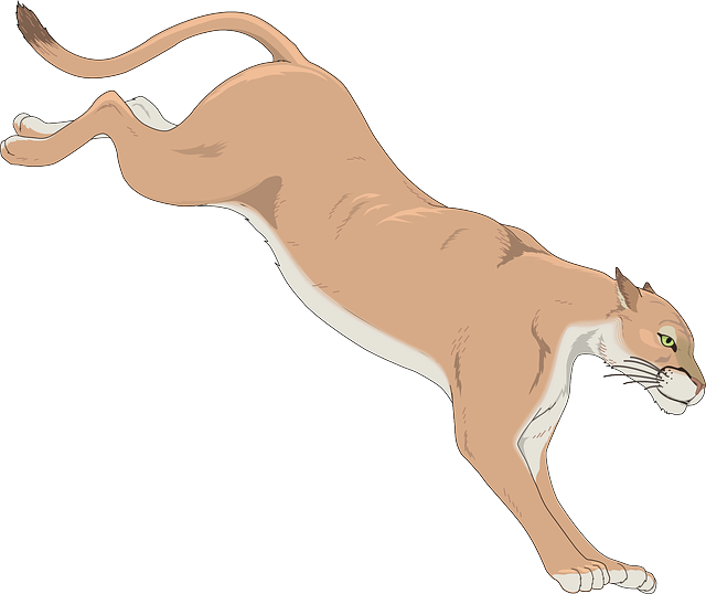 png free download Leaping . Cougar clipart
