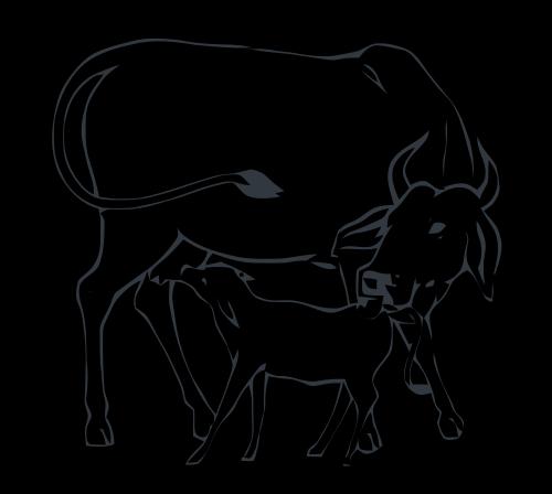 image free stock Cow And Calf Drawing at GetDrawings