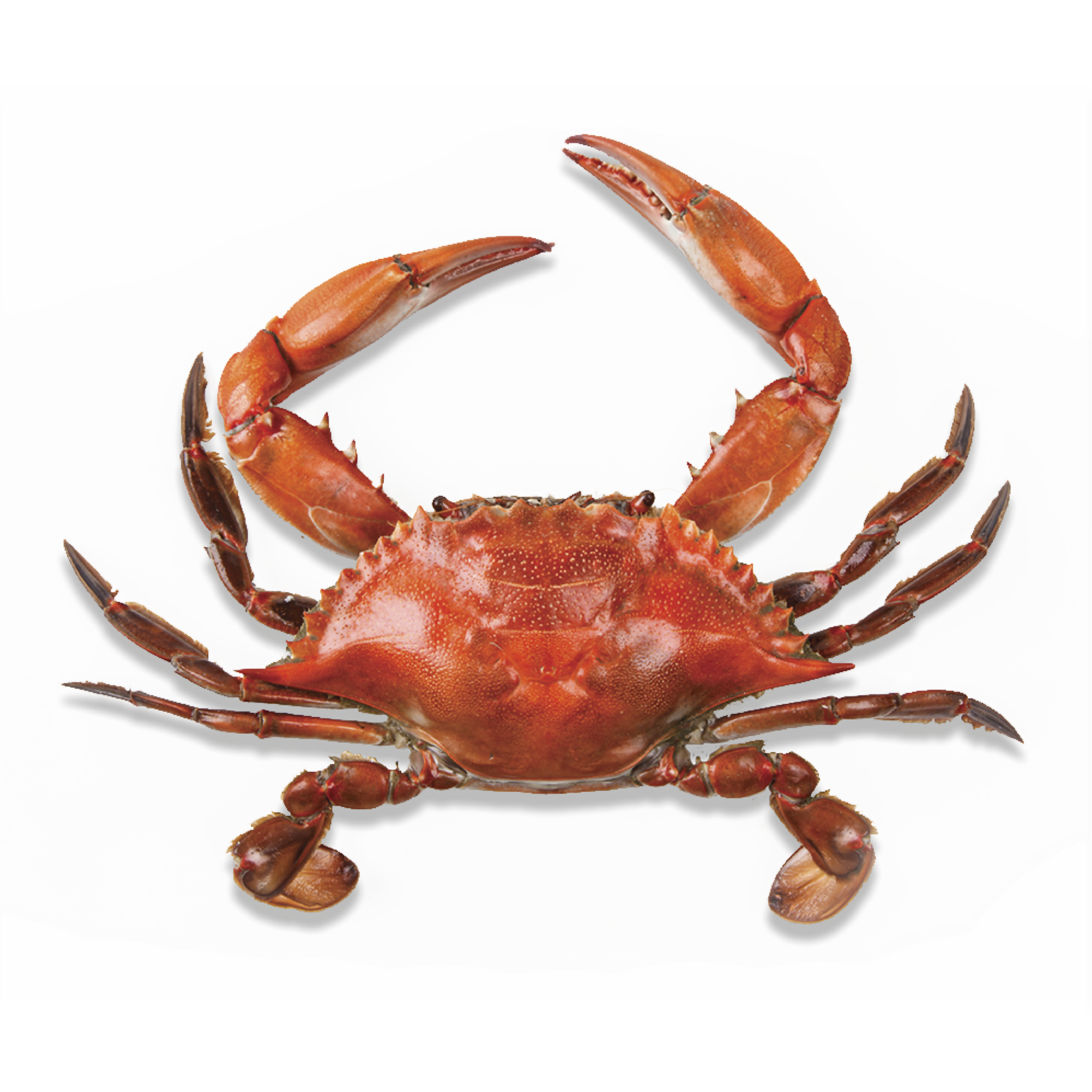 png library Png images pluspng. Crab transparent