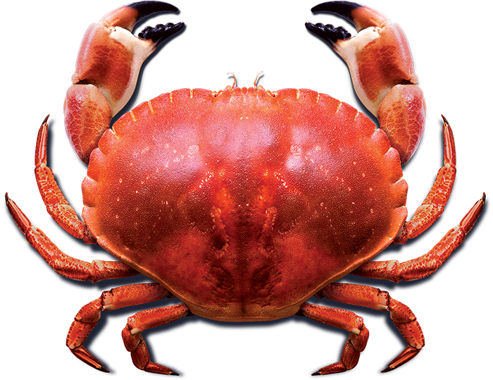 clip art royalty free download Blue sea home of. Crab transparent european