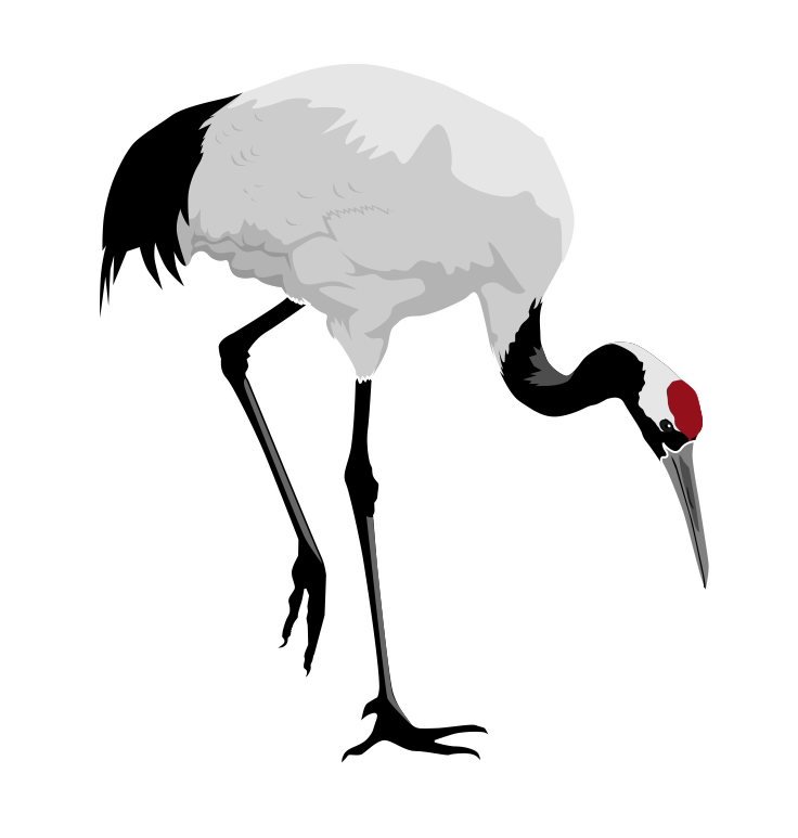 png royalty free library Red . Animal crane clipart