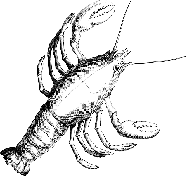 clip transparent download Lobster Drawing at GetDrawings